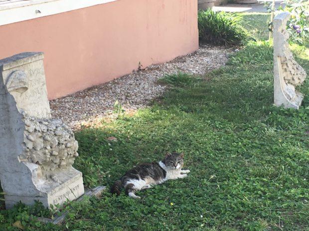 Chats du cimitero
